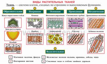 Биология цветок 6 класс биология